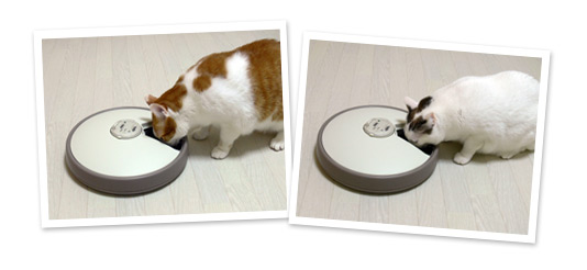 automatic-feeder-for-cats-07